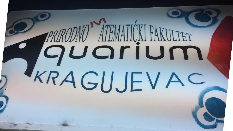 "Developing of conceptual design of Marine Biodiversity Conservation Center ""BokaAquarium"" and freshwater aquarium ""Skadarsko jezero"""