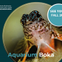 Aquarium Boka opening postponed