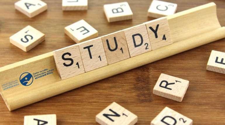 Studije